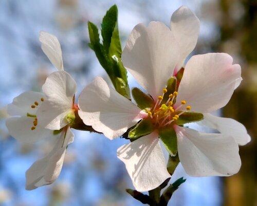Весна!