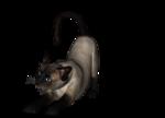 сиамские кошки (1).png