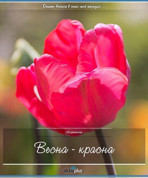 Весенние цветы 04