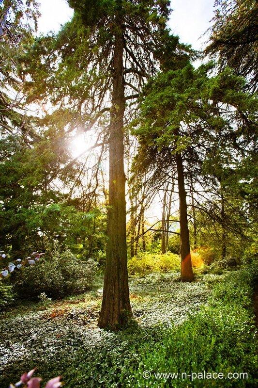 Никитский Ботанический сад #2 - Никитский Ботанический сад.