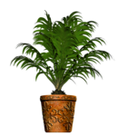 Potted Palms_Potted Palm 2_Scrap and Tubes.png