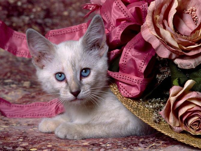 кошки - играет сам с собой