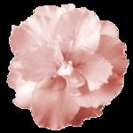 «cajoline_ FETE DES MERES» 0_5f045_4b464cf6_S