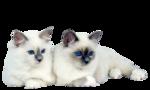 Кошки 5 0_50a36_baad1ef8_S