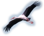 Птицы  разные  0_51c99_1c8842f_S
