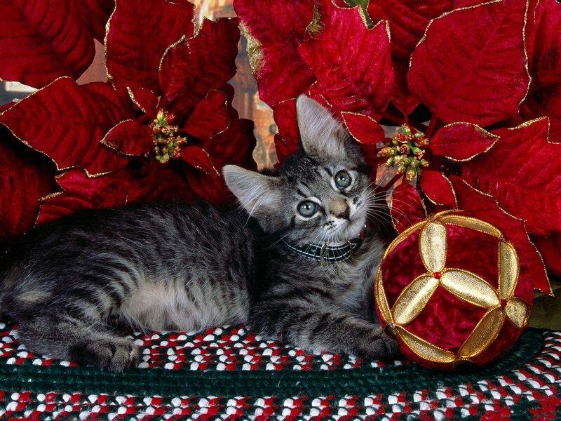 Кошки  0_5292f_e0c1144c_XL