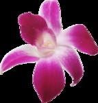 Орхидеи 40