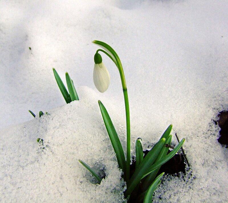 предыдущих день весны картинки окружающий мир робиком крестились