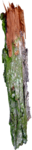 wlop_ev_forest (46).png