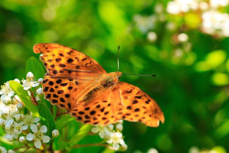 Бабочки с надписью картинки, открытка дню