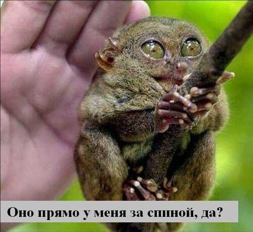 http://img-fotki.yandex.ru/get/5506/124059564.0/0_667dc_e22556a3_L.jpg