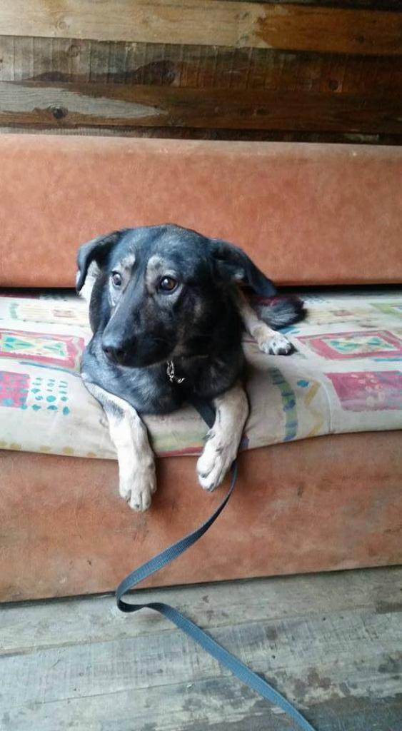 Руанда собака из догпорта