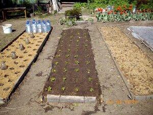 мульчирование растений