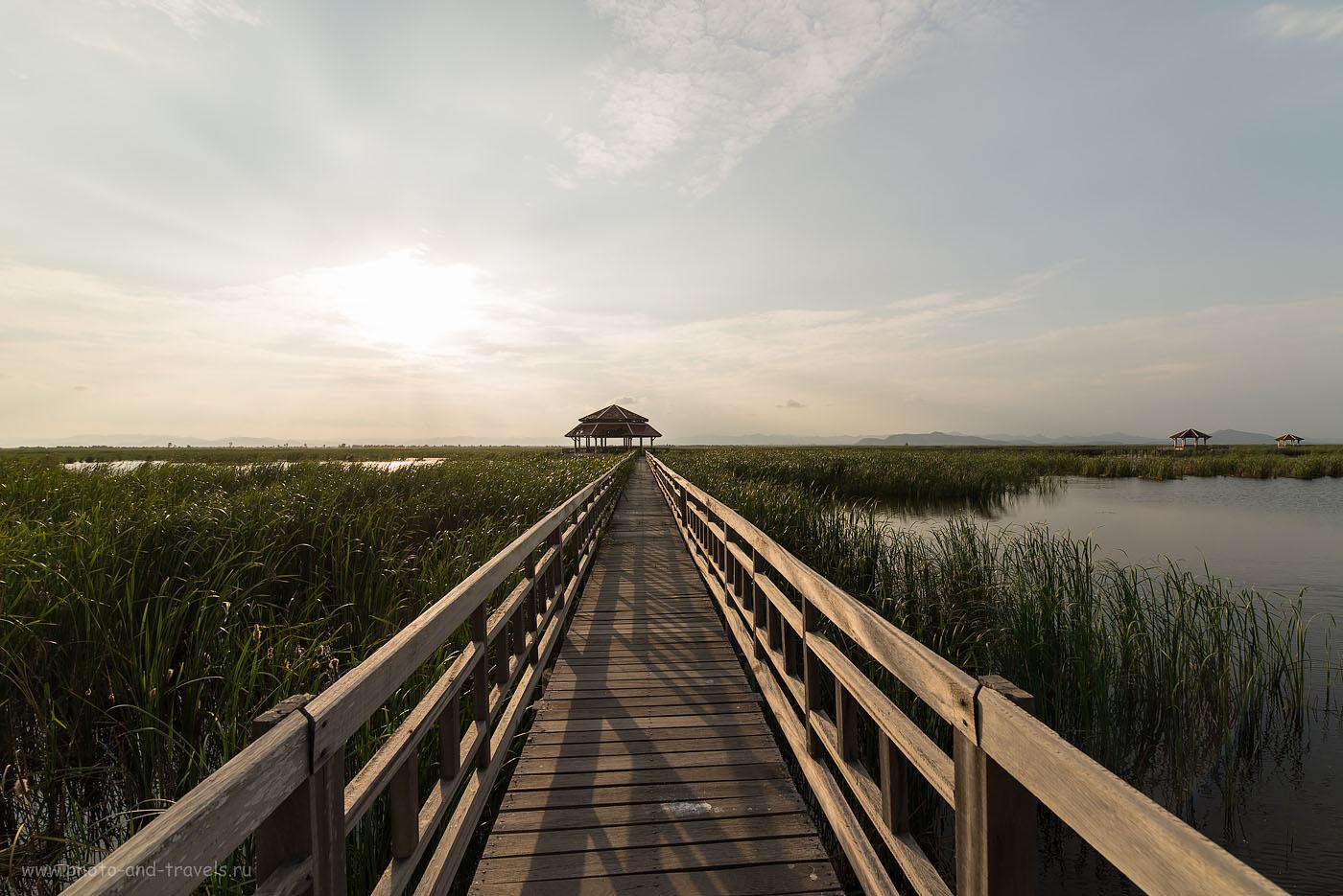 Фото 11. Дорога в болото Thung Sam Roi Yot Swamp . Национальный парк Као Сам Рой Йот (100, 14, F=8.0, 1/400, камера Nikon D610, объектив Samyang 14/2.8)