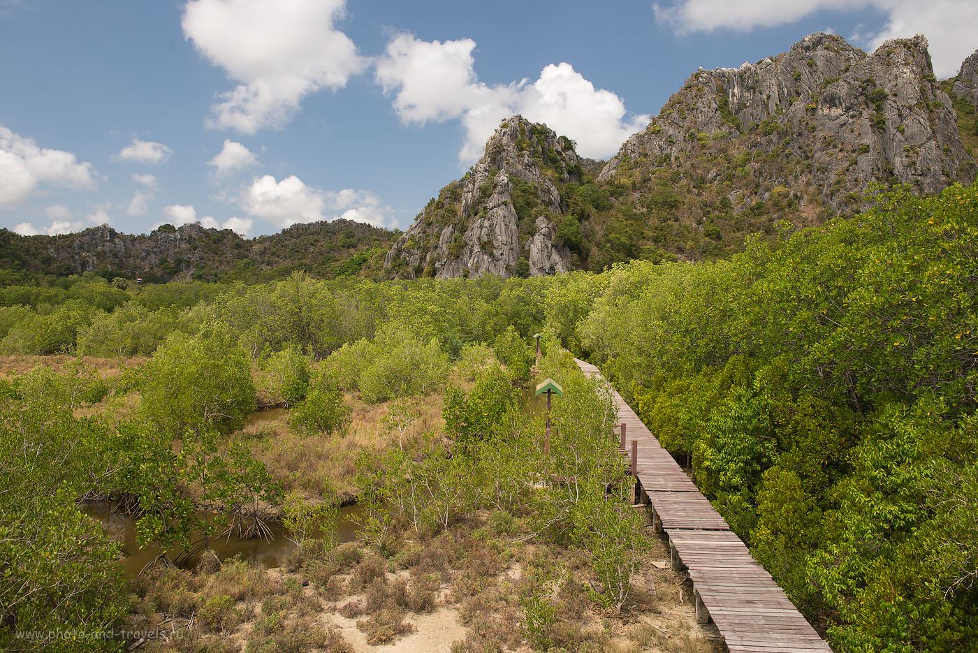Фотография 23. Вид на мангровый лес, открывающийся с вышки в парке Као Сам Рой Йот (Камера Никон Д610, объектив Никкор 24-70/2.8 с поляриком Hoya HD Circular-PL. Настройки: ИСО 320, ФР=28, F=8.0, выдержка 1/320)