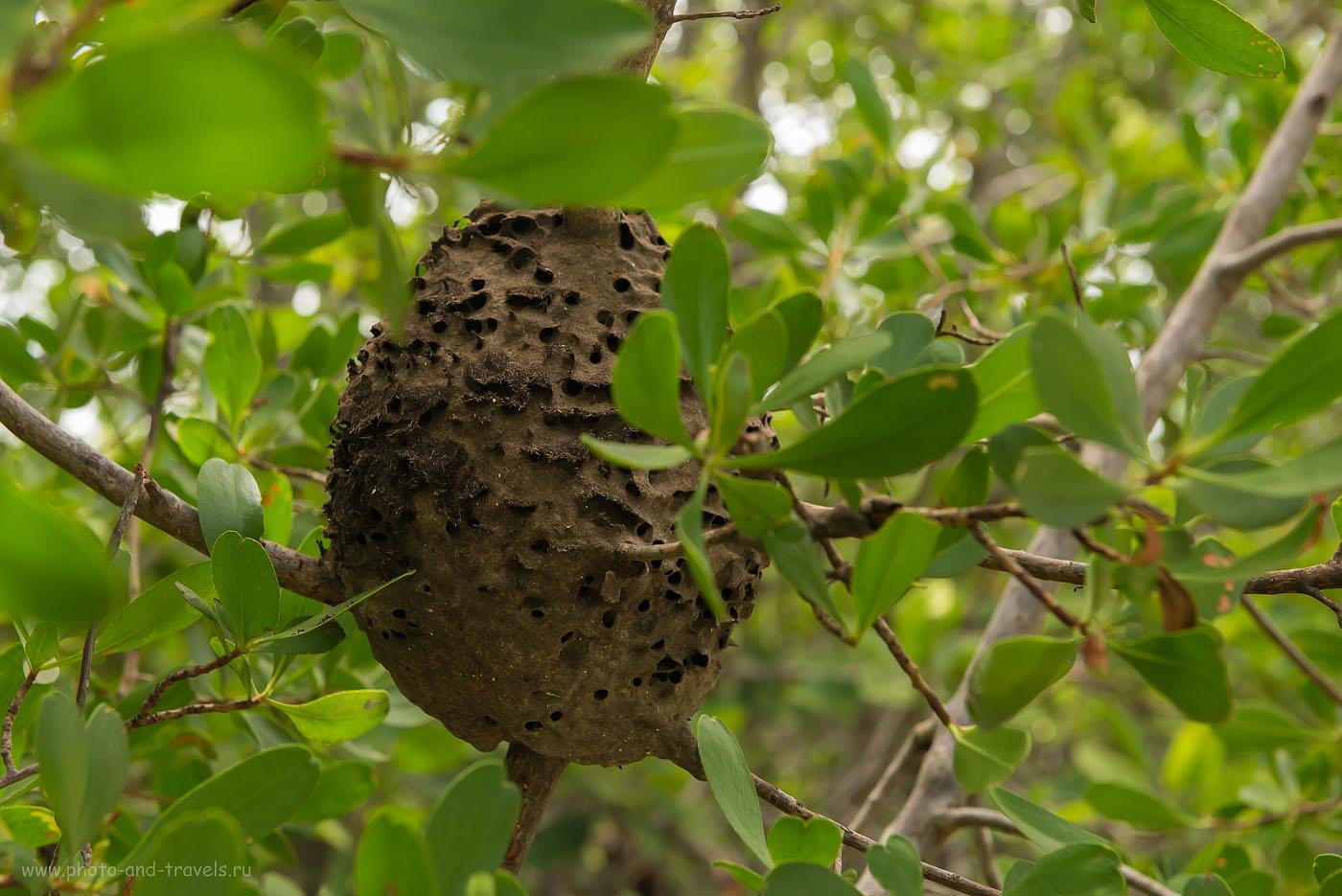 Фото 22. Осиное гнездо в мангровых зарослях около Khao Daeng Viewpoint. Отчеты туристов об отдыхе в Таиланде в феврале. (Камера Nikon D610 body, объектив Nikkor 24-70/2.8 с поляриком Hoya HD Circular-PL. Настройки: ИСО 1250, ФР=70, F=8.0, выдержка 1/160)