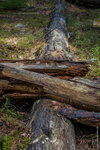 В сосновом бору. За светлым ручьем, недалеко от реки Молога в лес.