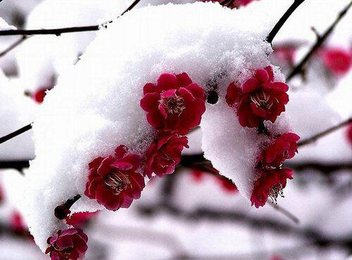 цветы Китая