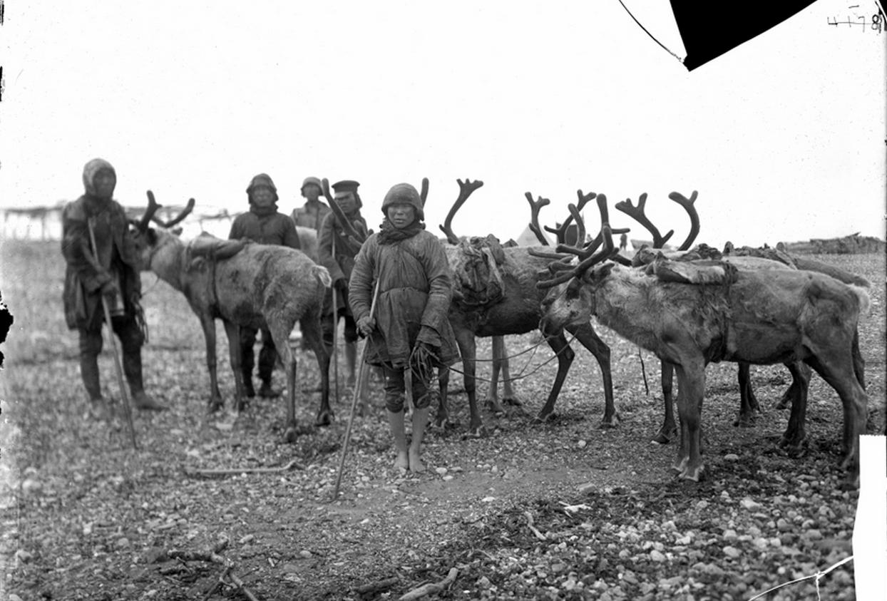 Мужчины с оленями