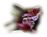 Flowers_114.png