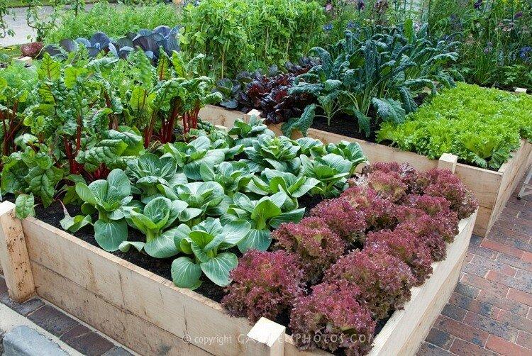 О принципах чередования культур на садовом участке.  Читайте далее о севообороте.