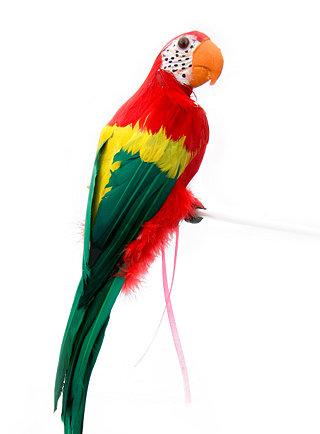Клипарт попугаи, бесплатные фото, обои ...: pictures11.ru/klipart-popugai.html
