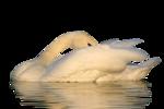 Птицы  разные  0_65dc1_5c9c1942_S
