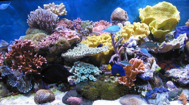 Подводный мир-Kораллы 32472