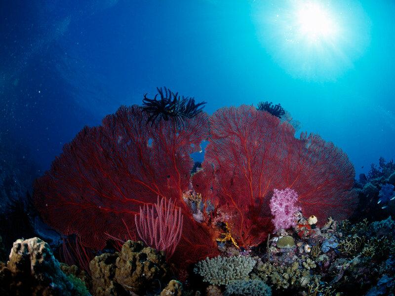 Подводный мир-Kораллы 87542