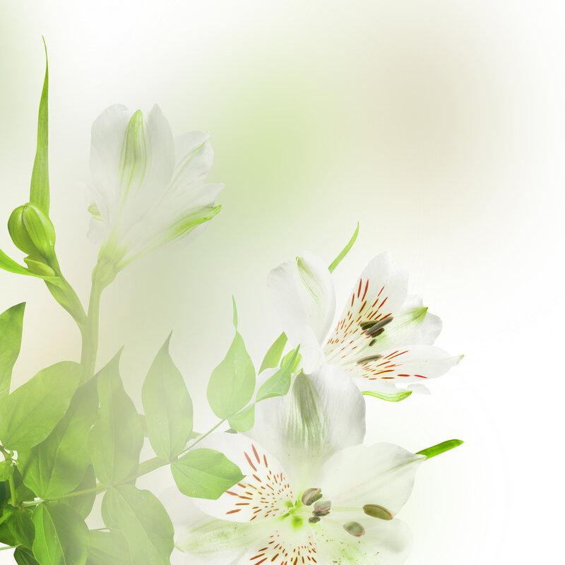 Растительные фоны для открыток
