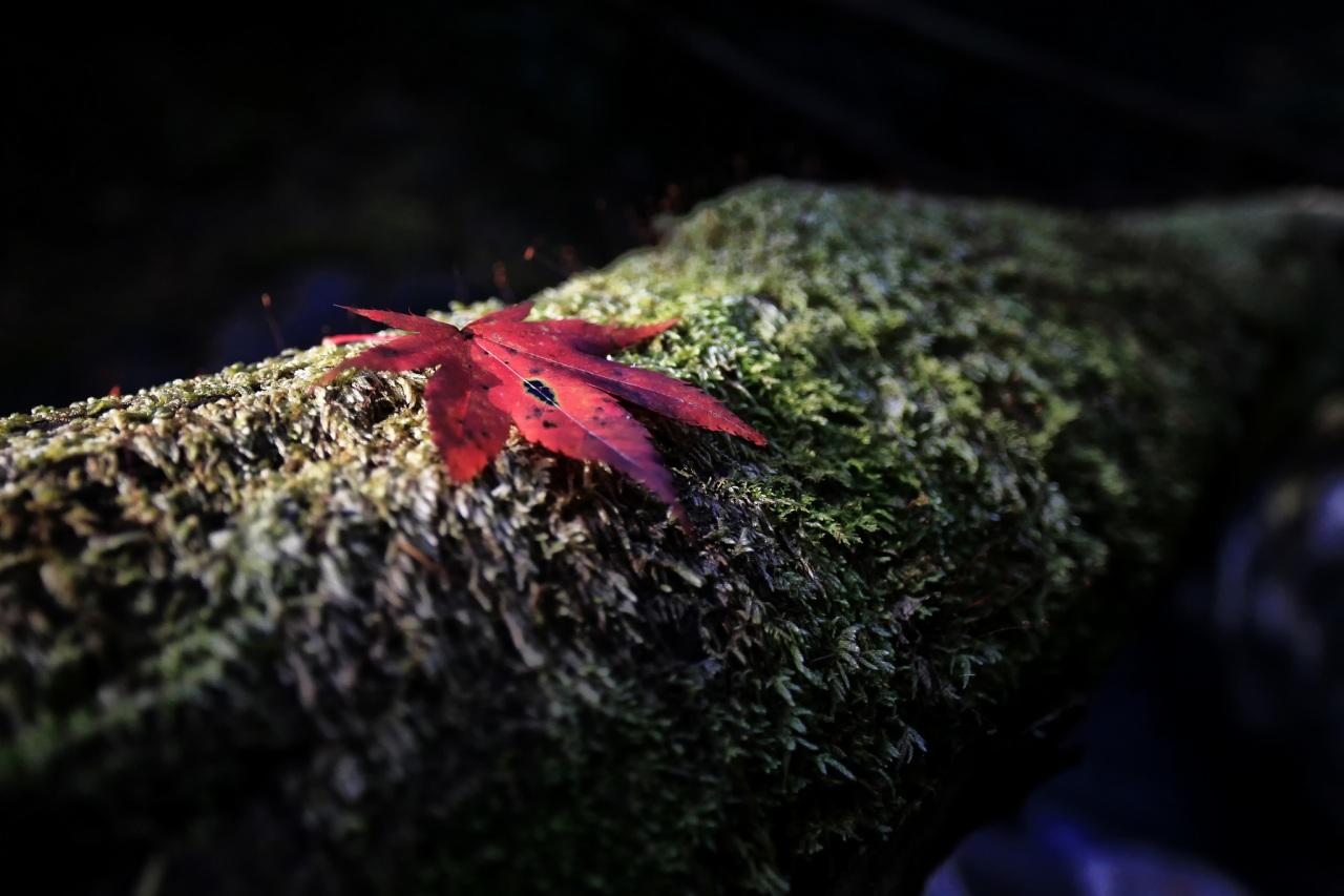 Closeup_Foliage_Moss_455390.jpg