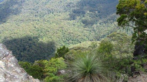 Диковинные растения травяное дерево