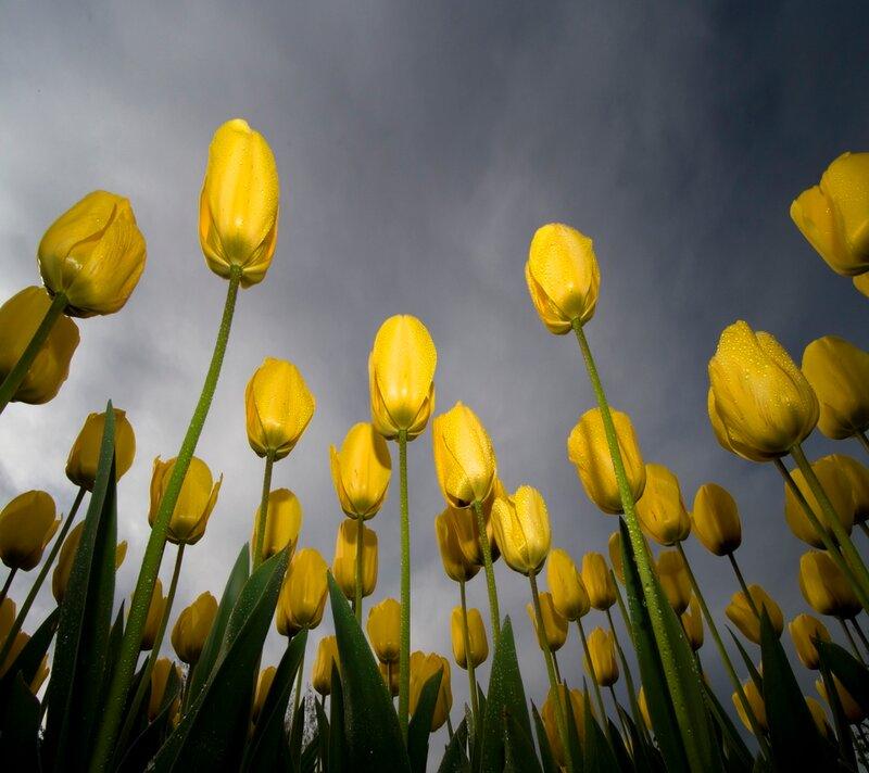 цветы и дерервья из бисера.