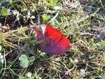 Огненный лист