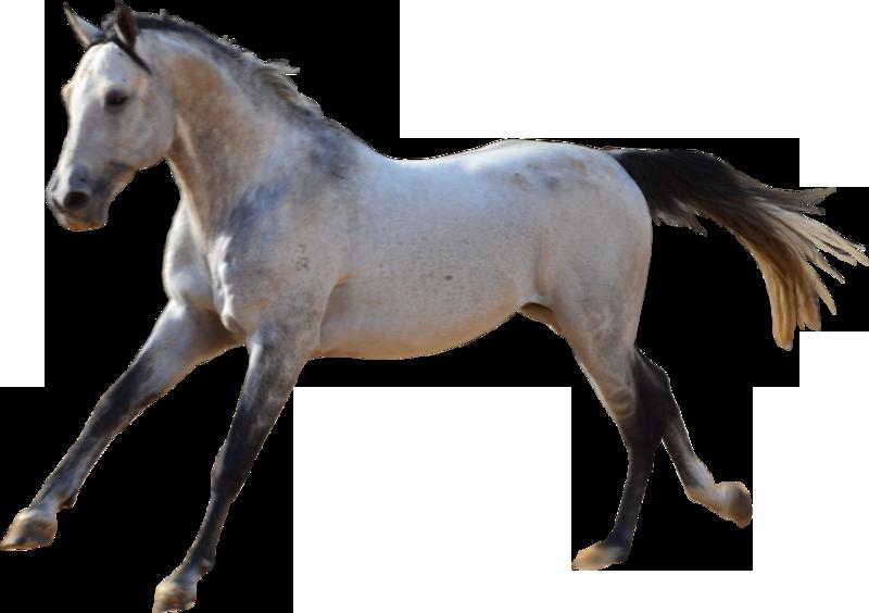 творожный конь картинки без фона состоит