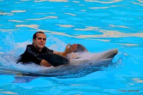 шоу дельфинов, лоро парк