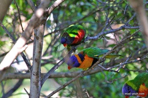 попугаи, лоро парк