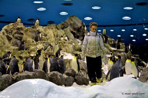 пингвины, лоро парк