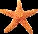 pd-starfish-01.png