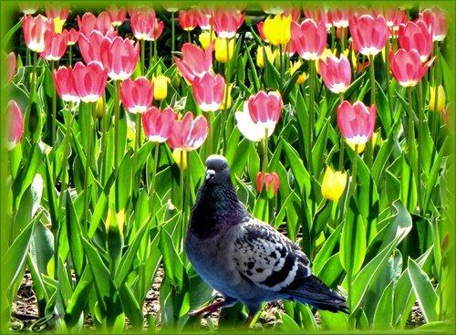 Цветы для голубки