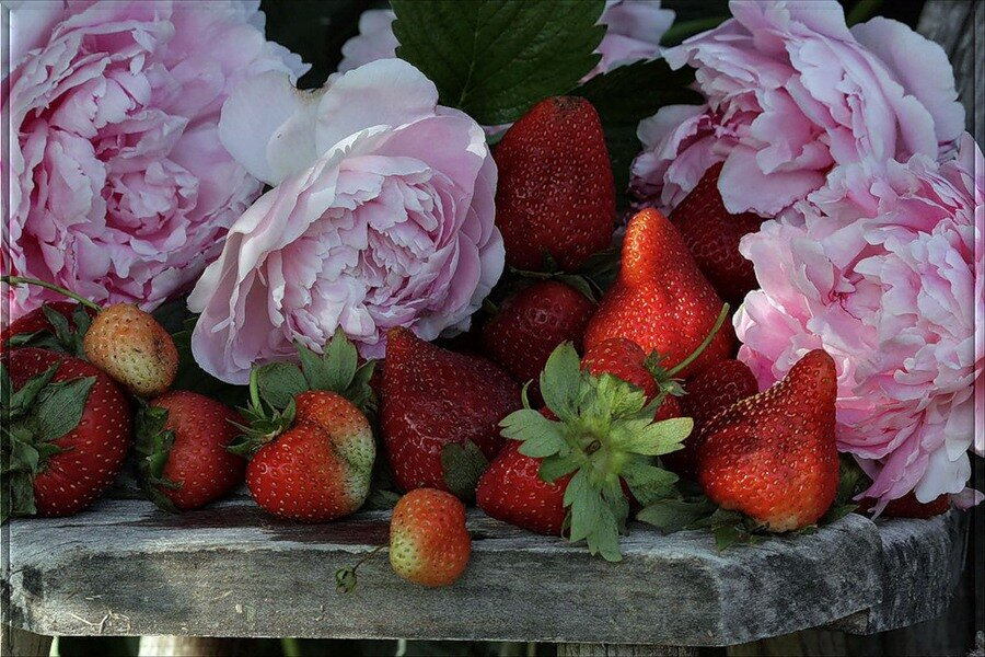 какая ягода не вызывает аллергии