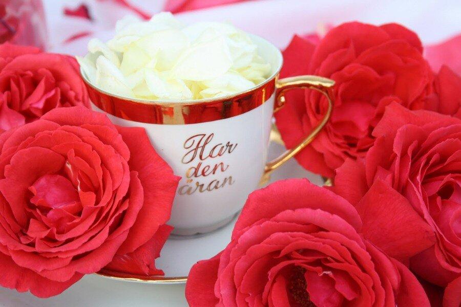картинки розы букеты большие с добрым утром бегония имеет