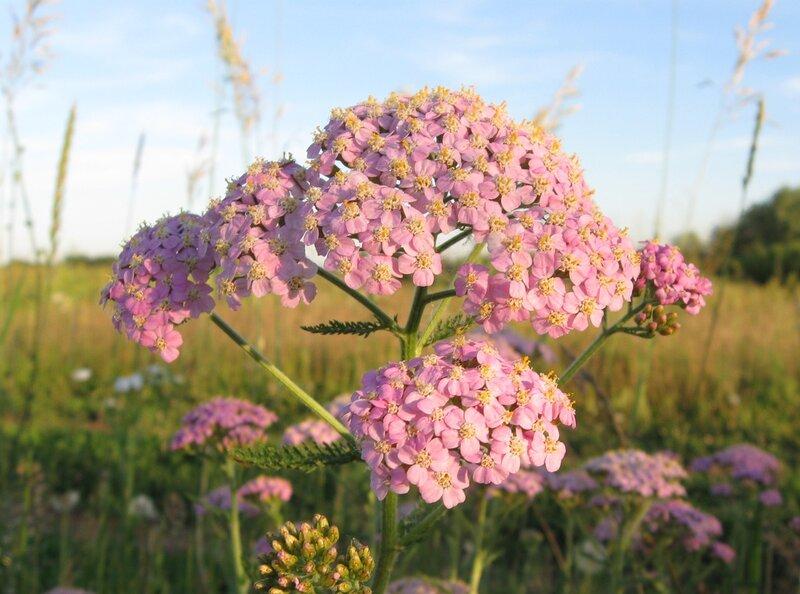 Альбом: цветы и другое Автор фото: Олег Селиверстов