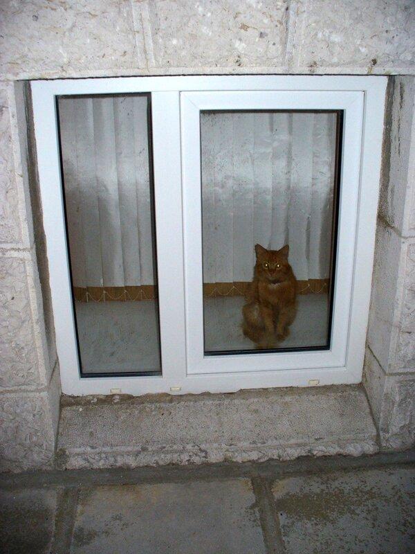 кот крымский...дворцовый...