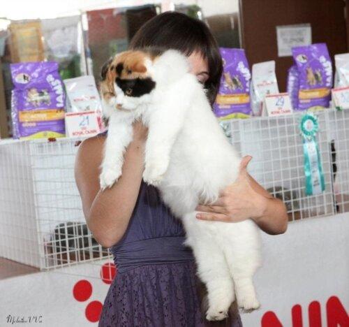 Корм для собак Royal Canin купить в интернет-магазине OZON