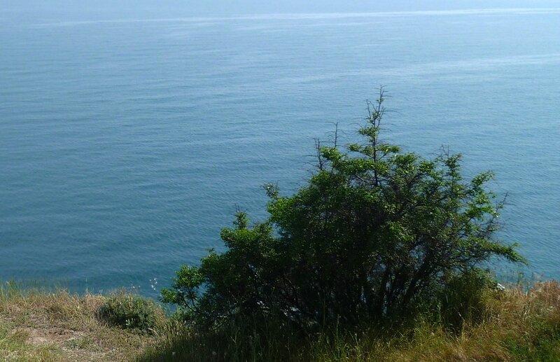 Смотрю на море с высоты птичьего полета