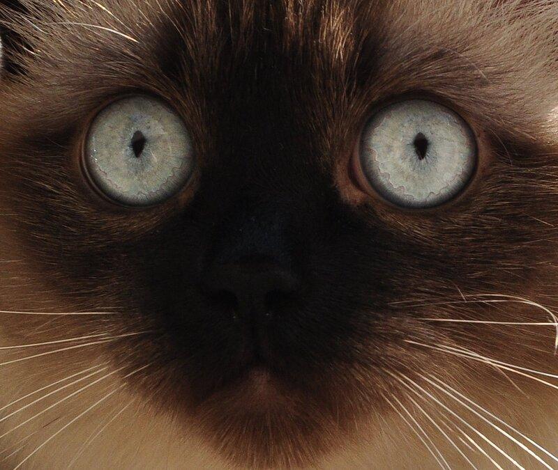 глаза, как блюдца )))
