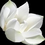«садовый фэн-шуй» 0_65d52_5886af87_S