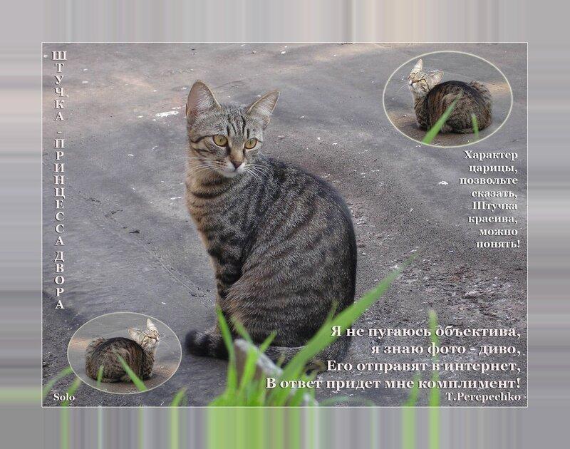 Кошка Штучка