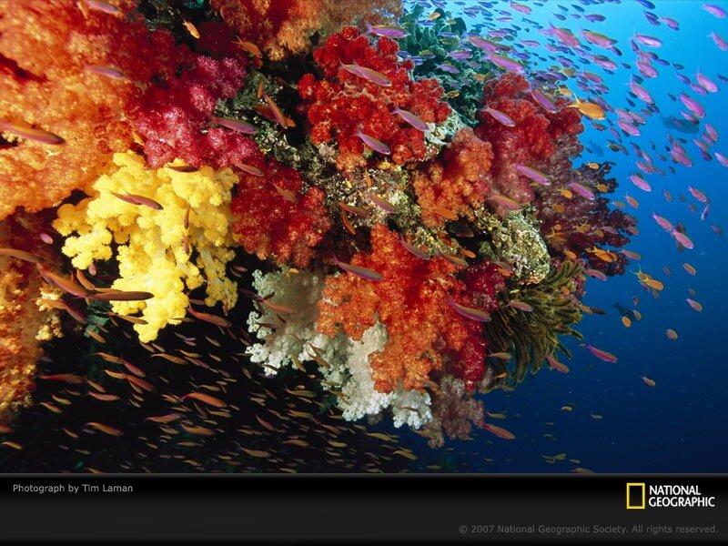 Подводный мир-Kораллы 89195